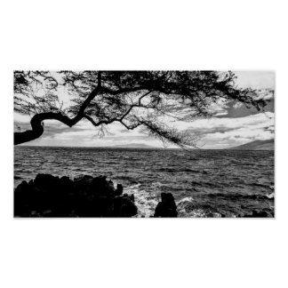 Oceanside Tree in Hawaii Black and White Poster