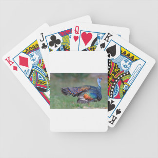 Ocellated Turkey in Guatemala Bicycle Playing Cards