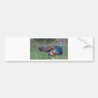 Ocellated Turkey in Guatemala Bumper Sticker