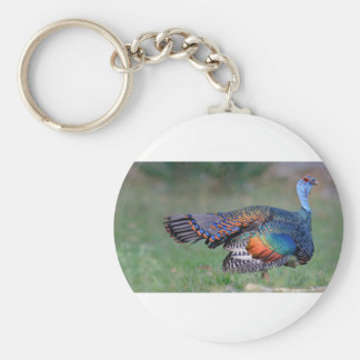 Ocellated Turkey in Guatemala Key Ring