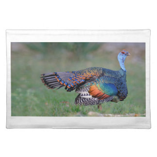 Ocellated Turkey in Guatemala Placemat