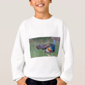 Ocellated Turkey in Guatemala Sweatshirt