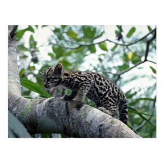 Ocelot-baby climbing tree postcard