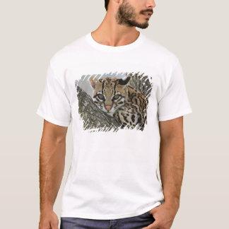 Ocelot, Felis pardalis, captive, female resting 2 T-Shirt