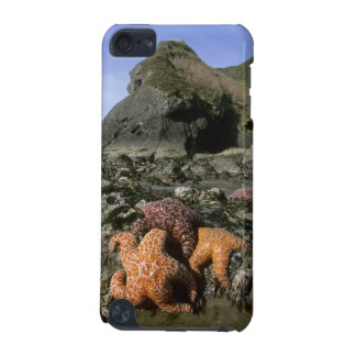 Ochre Seastars Pisaster ochraceous) Shi-Shi iPod Touch (5th Generation) Cover