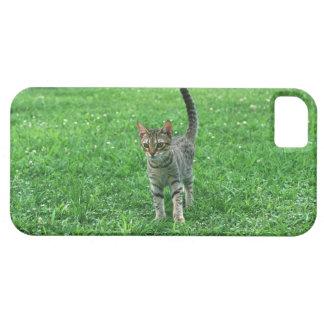 Ocicat 3 iPhone 5 cases