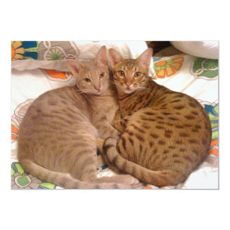 ocicats Lavender and Chocolate Card