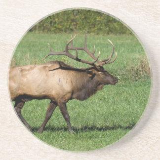 Oconaluftee Elk Coaster