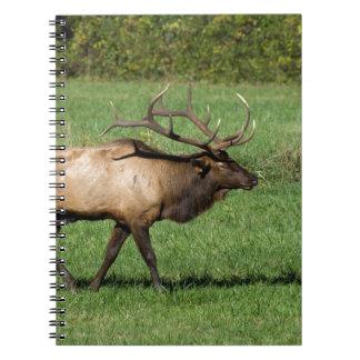 Oconaluftee Elk Notebooks