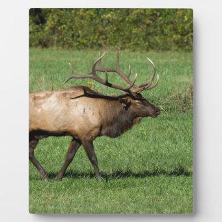 Oconaluftee Elk Plaque