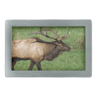 Oconaluftee Elk Rectangular Belt Buckles