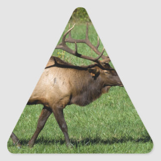 Oconaluftee Elk Triangle Sticker