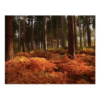 October Light Postcard