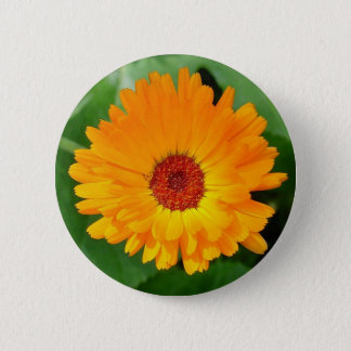 October's Summer Sunlit Marigold 6 Cm Round Badge
