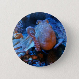 Octopus 6 Cm Round Badge