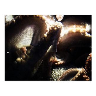 Octopus Newport Aquarium Postcard