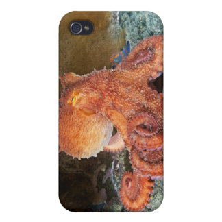 octopus or octopi IPhone 4 Speck case iPhone 4/4S Cover