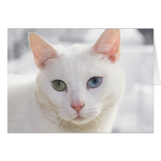 odd-eyed white cat close up face greeting card