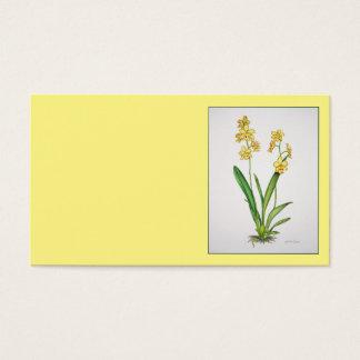 Odontonia Orchid