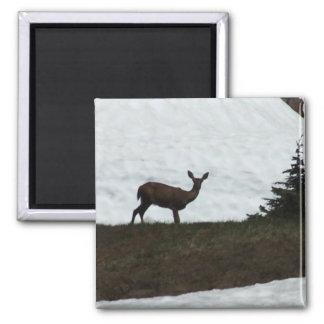 Oh Deer! Square Magnet