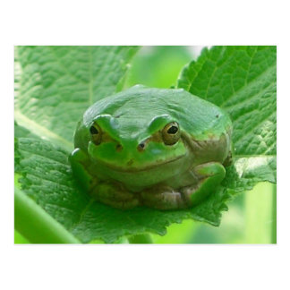 Oh happy day - green frog close up postcard