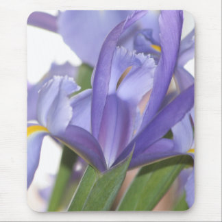 Oh Mighty Iris! mousepad