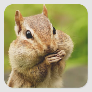 Oh So Cheeky Chipmunk Square Sticker