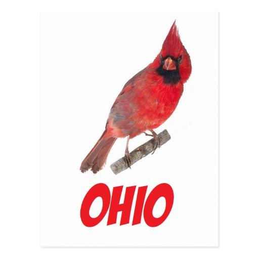 Ohio Cardinal Post Cards