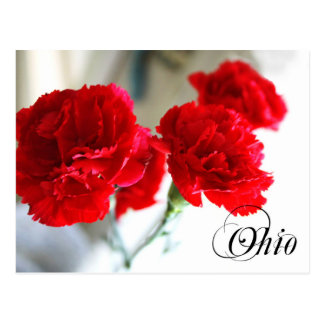 Ohio State Flower: Red Carnation Postcard