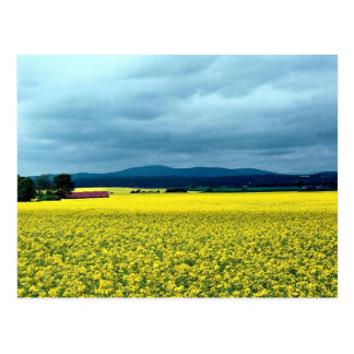 Oil-seed rape, Angus, Scotland at the Cornish Rivi Postcard