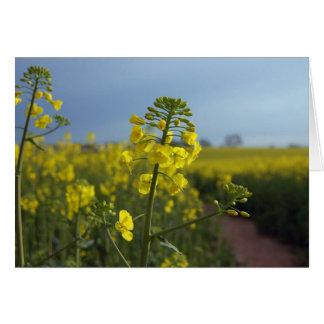 Oil seed rape flowers card