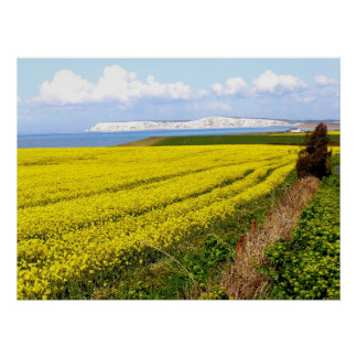 Oilseed rape field in the Isle of Wight Poster
