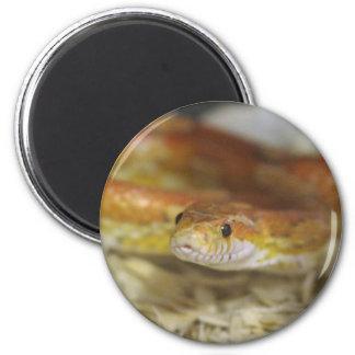 oj the snake 6 cm round magnet