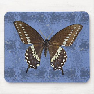 Oklahoma Black Swallowtail Butterfly Mouse Pad