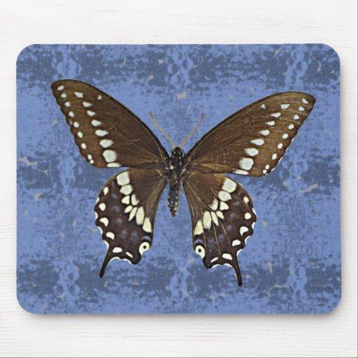 Oklahoma Black Swallowtail Butterfly Mousepad