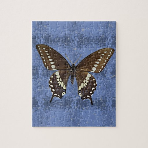 Oklahoma Black Swallowtail Butterfly Jigsaw Puzzles