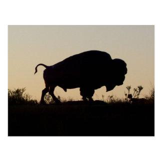 Oklahoma Buffalo Postcard