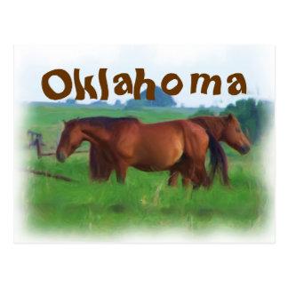 Oklahoma horses 2 postcard