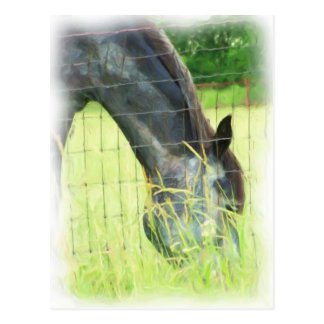 Oklahoma Horses 3 Postcard