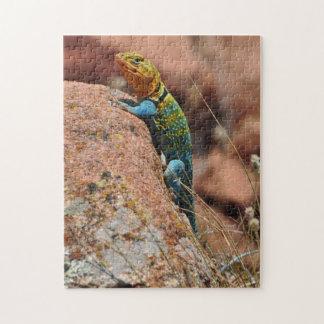 Oklahoma Lizard Puzzle