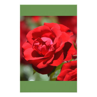 Oklahoma Rose Custom Stationery