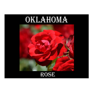 Oklahoma Rose Postcard
