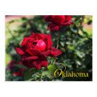 Oklahoma State Flower: Oklahoma Rose Postcard
