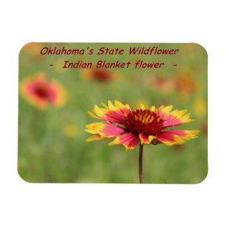 Oklahoma State Wildflower Magnet
