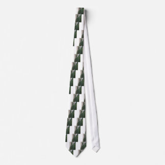 Old abandoned country homestead in the woods tie