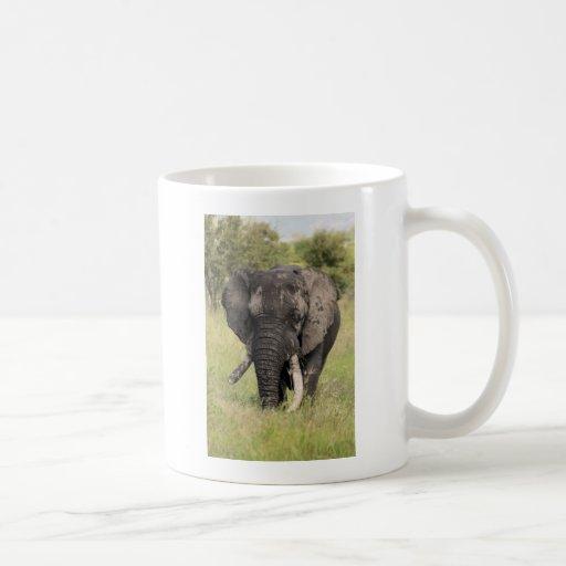 Old African elephant bull - broken tusk (Africa) Mug
