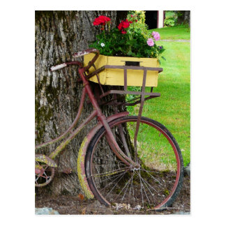 Old Antique Bicycle with Flower Basket Postcard