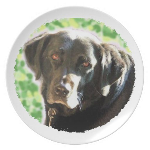 Old Black Labrador Photo Gifts you can personalise Dinner Plates