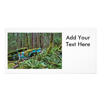 Old Car in the Forest Photo Card Template
