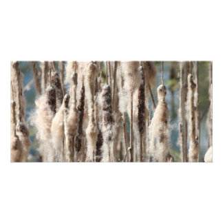 Old cattail customized photo card